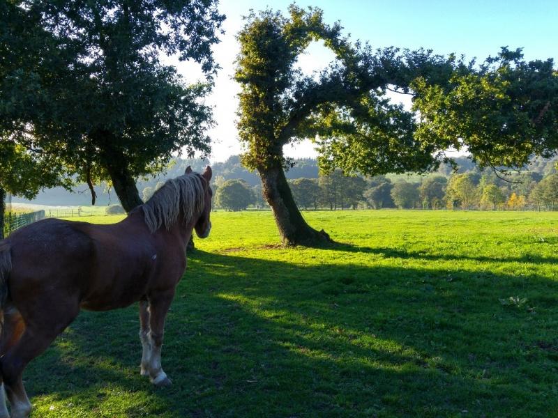 caballo descansando