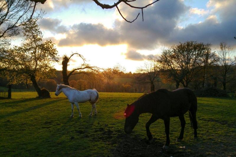 caballo relax